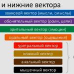 Система 8 векторов (кожный вектор и анальный вектор)
